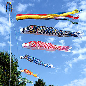 鯉のぼりのシルキー鯉